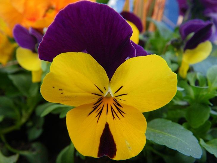 30 imágenes bonitas de Flores Hermosas para apreciar y