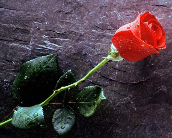 flores 21