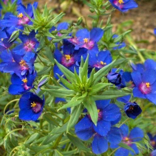 flores 25
