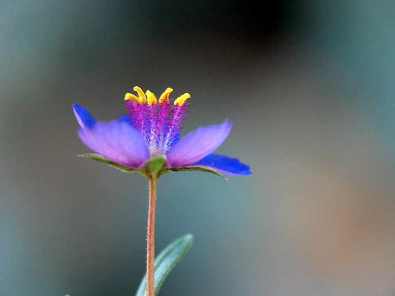 30 Imagenes Bonitas De Flores Hermosas Para Apreciar Y Descargar