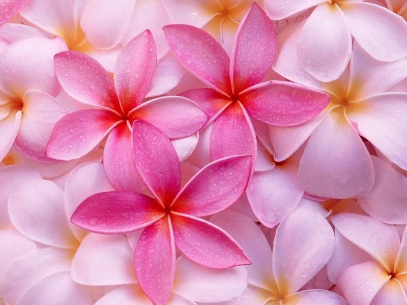 30 imgenes bonitas de Flores Hermosas para apreciar y descargar